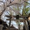 桃谷 コリアタウン 近所の 縁結びの 神様んとこの 桜 (벚꽃)