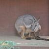 「のびのび〜」な動物園♫