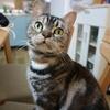 一眼レフ Canon EOS M10 買ったのですみちゃん(猫)撮りまくってみた。
