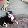 ぼくの犬の系譜・・その魅力としつけ!