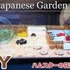 【ハムスター 動画】ハムスターのケージを日本庭園風にDIYしてみたらめちゃ興奮してくれた! I tried to make the hamster's house a Japanese garden!