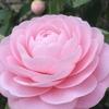 幸せ感じる ♡ ピンク色