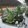 ここは植物園かよ!マドリード(スペイン)アトーチャ駅の待合室がすごい