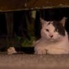 とりあえず八丈島の猫の写真を1枚