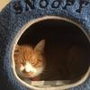 うちの猫(茶)はルナ=ペントグラム=フリードリヒといいます