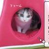 猫の道具 ~新しい猫ハウス~