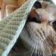 うさぎのブランケットと猫たち