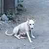 裏庭の動物達②子犬の悲劇@フィリピン ダバオ市
