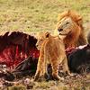 複雑な力関係 ◆ 「BBC Earth サバイバルストーリー~大自然を生きる~」