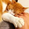 猫はやっぱり可愛い!猫を愛でたくなる写真を集めたよ!
