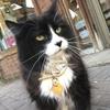 【癒し】モントリオールの猫たち