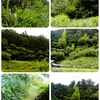 ep.57  ジャングルを行く①