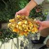 秋の収穫と、小さな ごはん