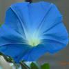 セプテンバー・ブルー