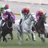 11.8 阪神競馬 注目馬
