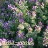 近所の花(3月中頃)