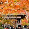 関西の紅葉絶景スポットを振り返る~有名所から穴場まで~①