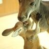 【大阪・天保山】『天保山アニパ』で初めてカンガルーに触ったら、毛の柔らかさに驚いた