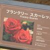 フランクリースカーレット 京成バラ園 2016/05/16