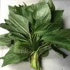 モロヘイヤ:余り調理したことありません.ビタミンEをとるためにエジプト風スープに挑戦してみようかしらん./ 麻の実が大麻草の実だったのに対して,ジュート麻材料の葉だったんですね.熟した実に気をつければ,とても有用な植物といって良いようです.