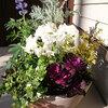 マイホーム購入をきっかけにはまった園芸。葉牡丹含めた新年にも似合う寄せ植えを紹介