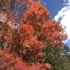 秋の野山を訪ねよう!!  【日光編】