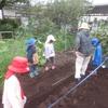 秋のニンジン栽培(ペレット種子と3歳児)