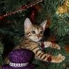 【Christmasスライドショー作成しました】Merry Christmas(ღˇ◡ˇ)♥︎ℒᵒᵛᵉᵧᵤ♥︎