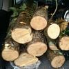 薪ストーブ原生代③ 幸先よく原木を手に入れる