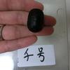 トウブドロガメ、最後の卵(13匹目)孵化。11月10日