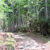 水源林広がる笠取山