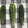 #夏の収穫祭り #夏野菜 #家庭菜園