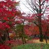 ミモザ・ガーデンの日記 紅葉の京都