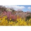 福島の桃源郷,花見山公園を訪ねた