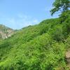 ◆5/20     新緑の湯ノ沢岳へ②