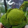 本格的な抹茶アイスが食べたくなる季節がやってきた!