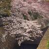 六甲→王子公園  桜散歩
