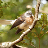 【野鳥旅行記】ニュージーランド:キーウィに会いにスチュワート島へ