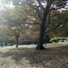 秋の写真撮影会@祖師谷公園。