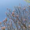 地球の歩き方でもおすすめされている「ラールバーク植物園」に行ってきた【インド バンガロール一人旅 No.1】