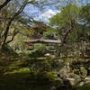 京都で春の銀閣寺に行き、苔や桜を見る