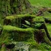 苔の杜 白山平泉寺 #1