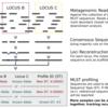 メタゲノムシーケンシングデータからMLST タイピングを行う MetaMLST
