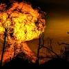 実は、過去最大の「大量絶滅」の最大の原因は火山活動だった
