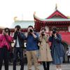 江の島ねこ撮影会(※)を企画して、撮りまくってきました!※名前はまだない