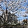 多摩川桜百景 -100. 久地円筒分水-