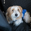 SUBARU XVで犬と秩父までドライブ:格安のペット用ドライブシートがかなり使えた件