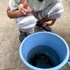 那須渓流パーク楽しい!魚も釣ったよ。