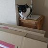 今日の黒猫モモ&黒白猫の動画はお休みです!