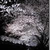 超ライトアップ桜